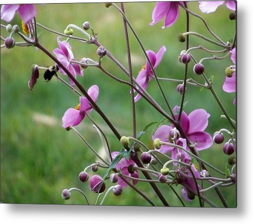 Flowers Metal Print featuring the photograph Honey Bee On Pink Flower by Donna Davis