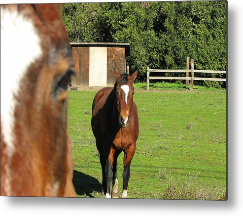 Horse Metal Print featuring the photograph Horses by Kathy Roncarati