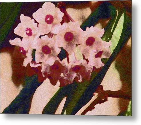 Abstract Metal Print featuring the photograph Hoya 2 by Lenore Senior