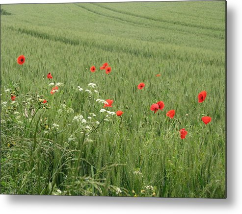 Lest-we Forget Metal Print featuring the photograph in Flanders Fields the poppies blow by Mary Ellen Mueller Legault