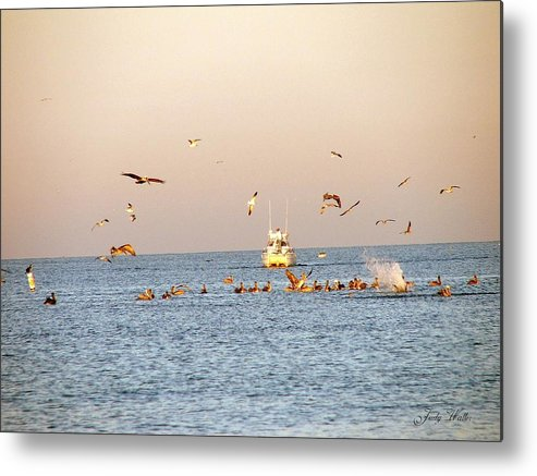 Feeding Metal Print featuring the photograph In Flight by Judy Waller