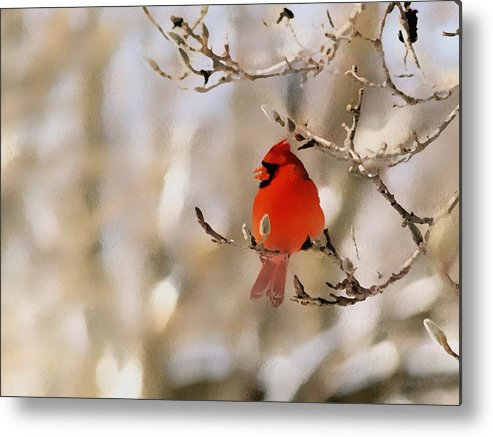 Cardinal Metal Print featuring the photograph In Red by Gaby Swanson
