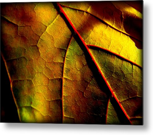 Yellow Metal Print featuring the photograph In The Shadows by Lisa Jayne Konopka