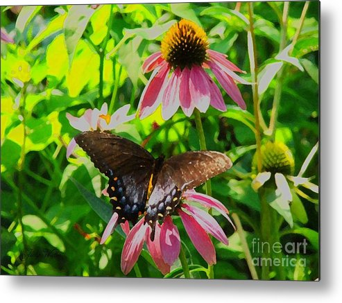 Butterfly Metal Print featuring the photograph In The Upper Garden - One by Judy Waller