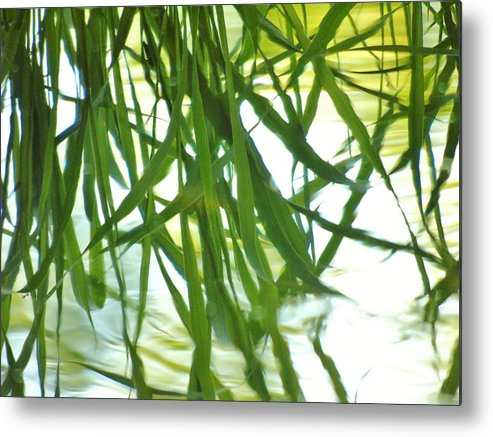Iris Metal Print featuring the photograph Iris Reflections by Barbara St Jean
