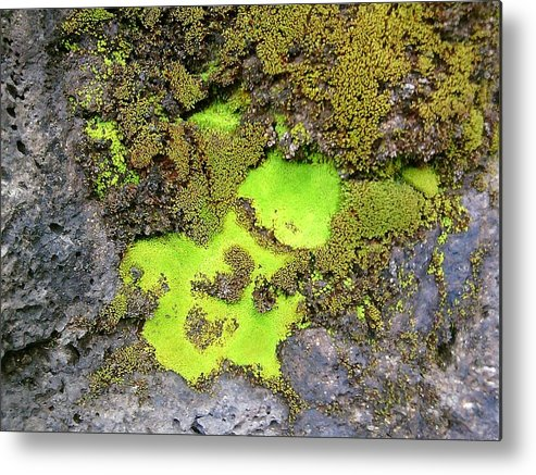 Green Metal Print featuring the photograph Jade Juice by Charles Jennison