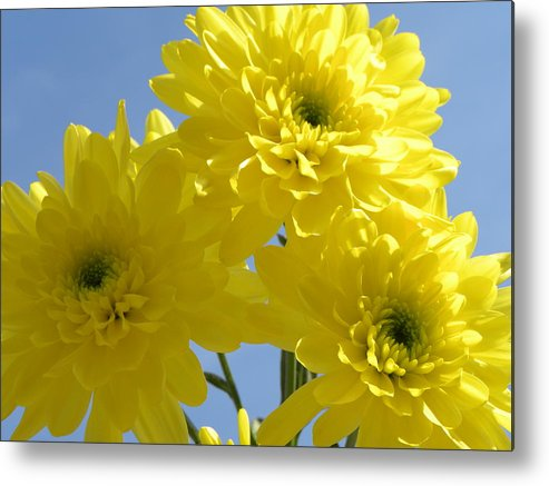 Nature Metal Print featuring the photograph Yellow Trio by Shannon Turek