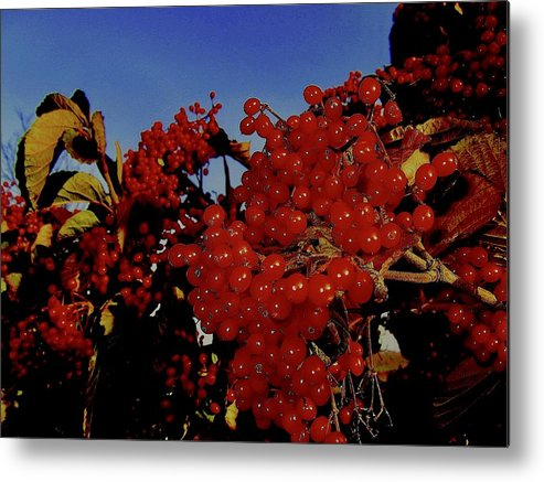 Berries Metal Print featuring the photograph Jewels Of Autumn 4 by Elizabeth Tillar