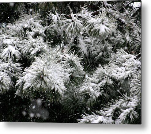 Frost Metal Print featuring the photograph Just Getting Started by David Dunham