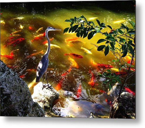 Bird Metal Print featuring the photograph Just Looking by Blima Efraim