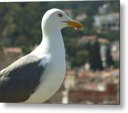 Seagull Metal Print featuring the photograph Keeper Of The Citadel by Dorin Emanoil Pirvu