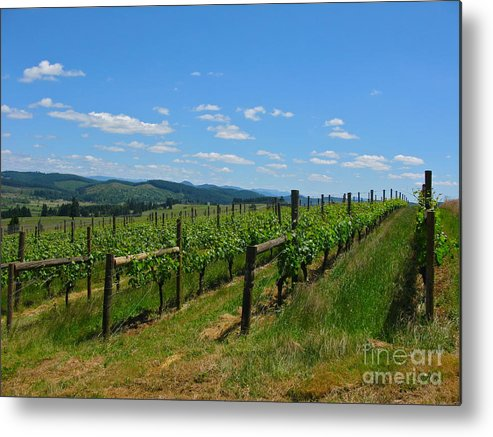 Vineyard Metal Print featuring the photograph King Estate Vineyard by PJ Cloud