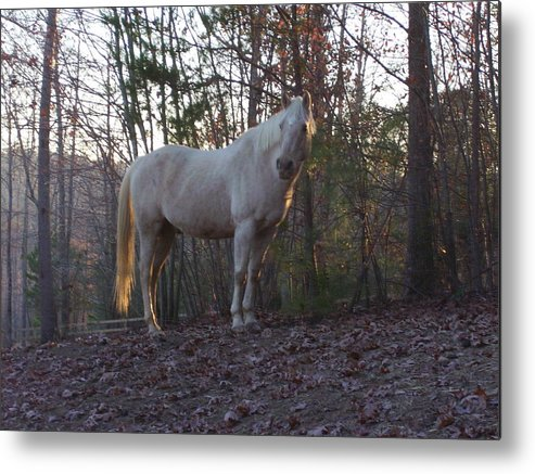 Horse Metal Print featuring the photograph King Of The Hill by Kristen Hurley