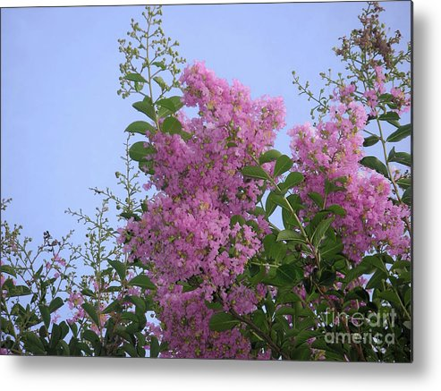 Nature Metal Print featuring the photograph Lavender Silhouettes by Lucyna A M Green