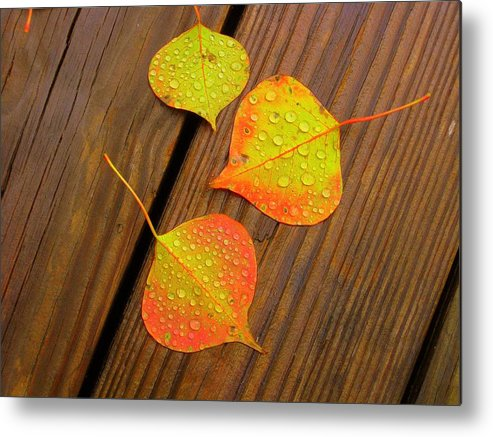 Leaves Metal Print featuring the photograph Leaf Drops 2 by Sharon Wright Duncan