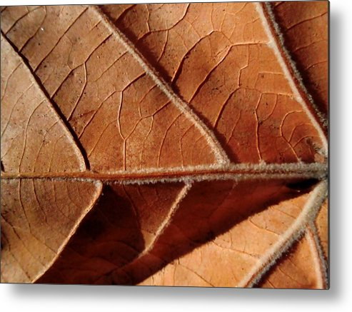 Sycamore Metal Print featuring the photograph Leaf Veins by Beth Akerman