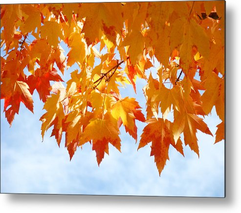 Autumn Metal Print featuring the photograph Leaves Nature Art Orange Autumn Tree Leaves by Baslee Troutman