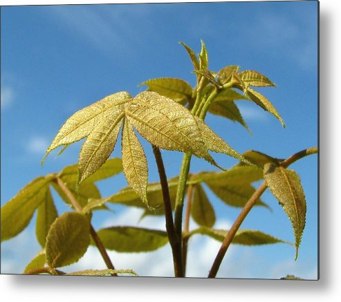Nature Metal Print featuring the photograph Leaves Of Gold by Peg Urban