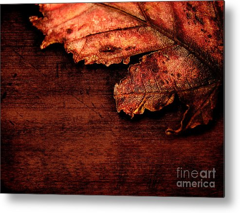 Red Metal Print featuring the photograph Let Me Hold You... by Dana DiPasquale