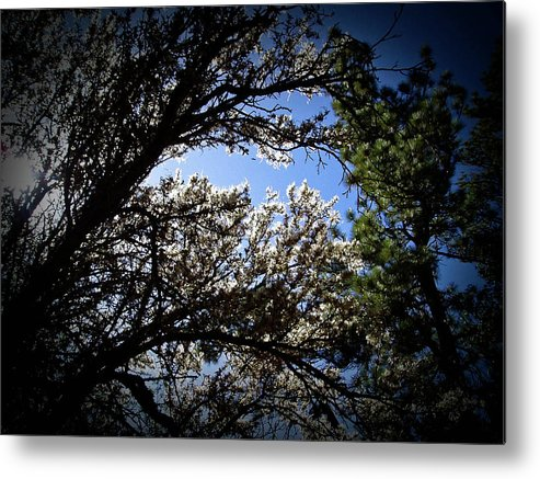 Light Metal Print featuring the photograph Light Off The Ironwood by David Dopps