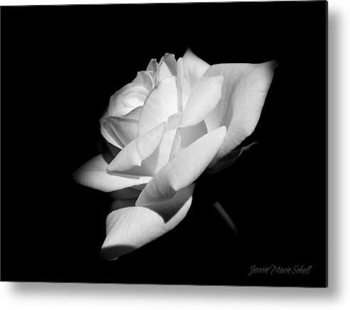 Rose Metal Print featuring the photograph Light On Rose Black And White by Jennie Marie Schell