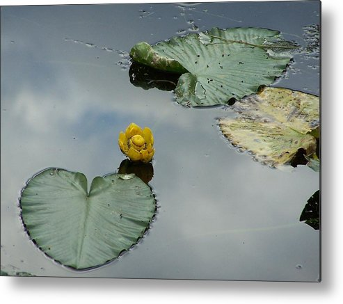 Lilly Pads Metal Print featuring the photograph Lilly Pads by Gene Ritchhart