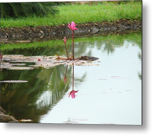 Landscape Metal Print featuring the photograph Lily-3 by Reshmi Shankar