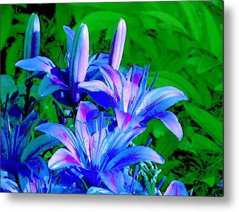 Digital Photography Metal Print featuring the photograph Lily In Green by Jim Darnall