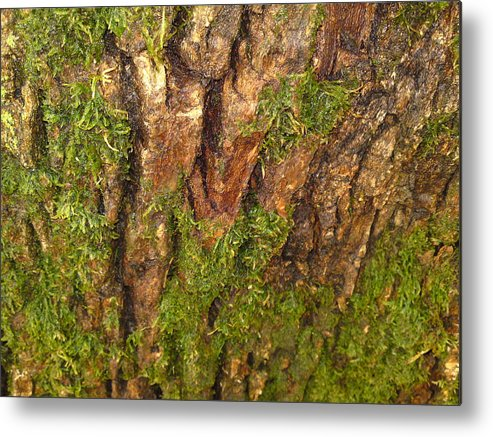 Tree Metal Print featuring the photograph Living On The Edge by DebiJeen Pencils