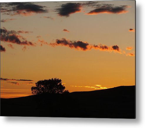 Landscape Metal Print featuring the photograph Lone Tree by Bernadette Bisbee