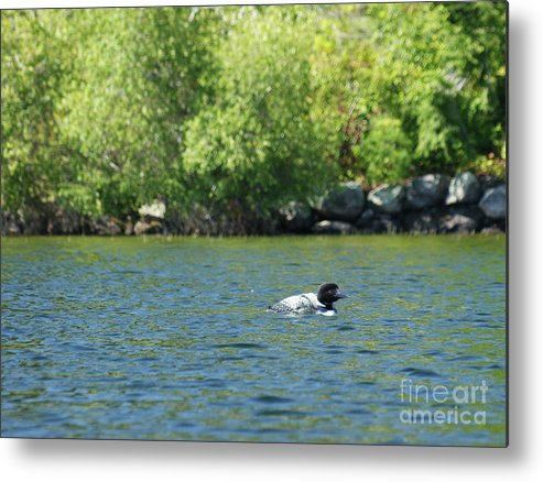 Loon Metal Print featuring the photograph Lonely Loon Taking The Red Eye by Judy Carr