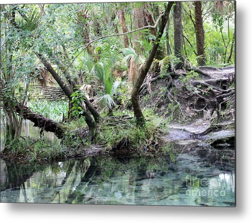Landscape Metal Print featuring the photograph Lovely Lithia Springs by Carol Groenen