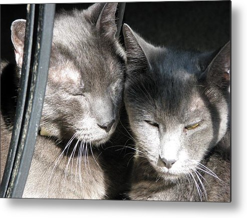 Cats Metal Print featuring the photograph Loving Wolves by Chris Gudger