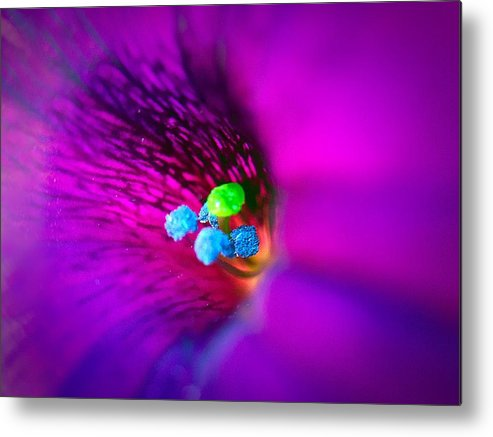 Ume Metal Print featuring the photograph Macro Purple Flower by Bri Lou