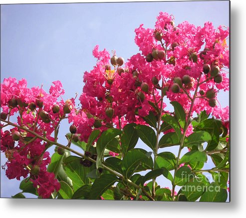 Nature Metal Print featuring the photograph Magenta Flames by Lucyna A M Green