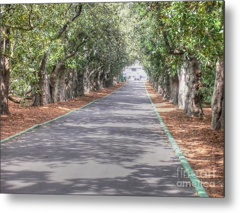 Augusta Georgia Metal Print featuring the photograph Magnolia Lane by David Bearden
