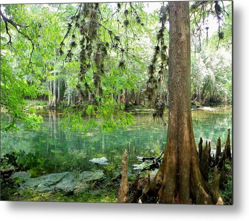 Manatee Springs Chiefland Florida Metal Print featuring the photograph Manatee Beauty by Sheri McLeroy
