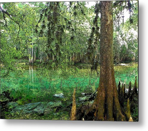 Manatee Springs Chiefland Florida Metal Print featuring the photograph Manatee Beauty Toon by Sheri McLeroy