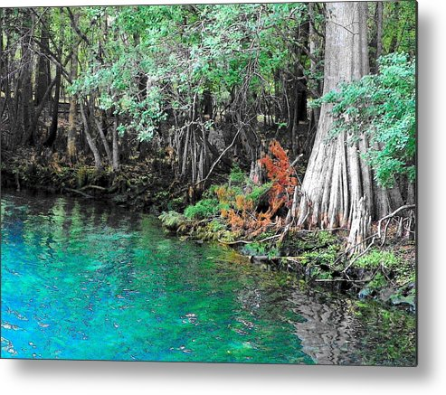 Manatee Springs Chiefland Florida Metal Print featuring the photograph Manatee Toon IIi by Sheri McLeroy