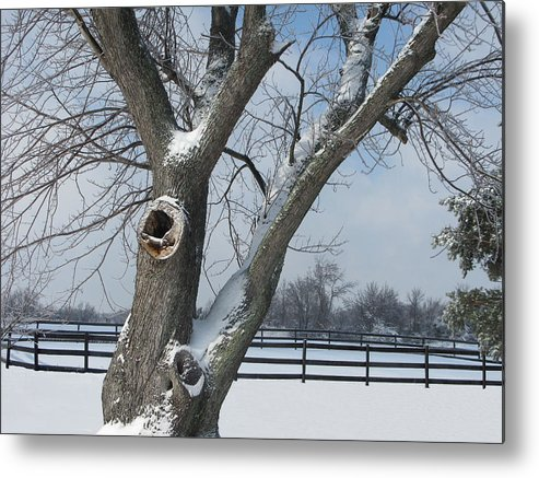 Winter Metal Print featuring the photograph Maple In Winter by Martie DAndrea