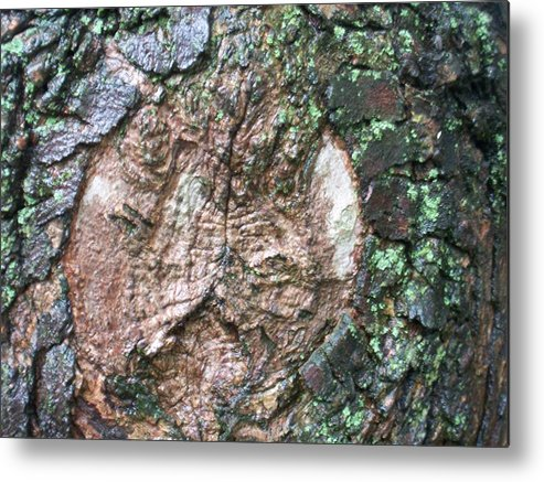 Nature Metal Print featuring the photograph Maple Tree In The Rain by Ellen B Pate