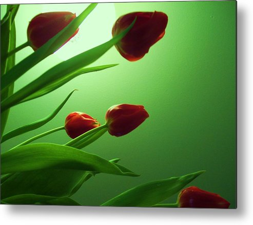 Moon Glow And Tulips Metal Print featuring the photograph Moon And Tulips by Nereida Slesarchik Cedeno Wilcoxon
