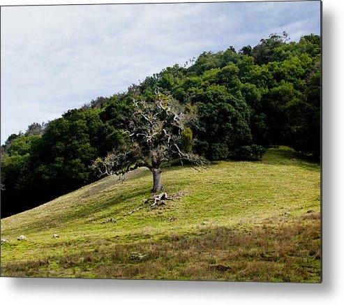 Trees Metal Print featuring the photograph Morgan Territory Oak by Karen W Meyer