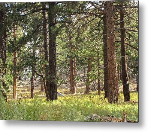 Chino Canyon Metal Print featuring the photograph Morning Canyon IIi by Helaine Cummins