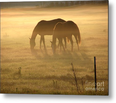 Horse Metal Print featuring the photograph Morning Grazing by Jack Norton