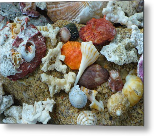 Shells Metal Print featuring the photograph Morning Treasures by Peggy King