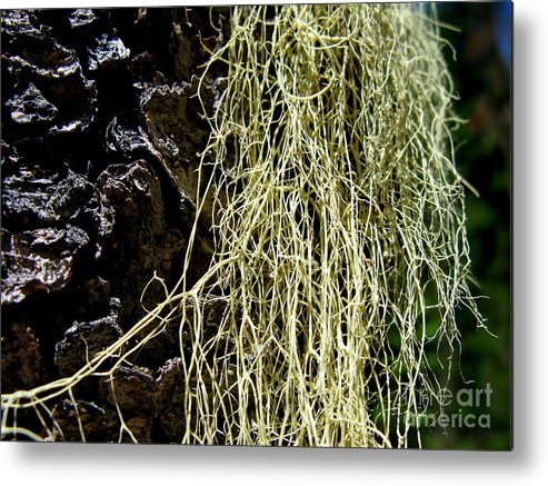 Tree Metal Print featuring the photograph Mossy Tree by PJ Cloud
