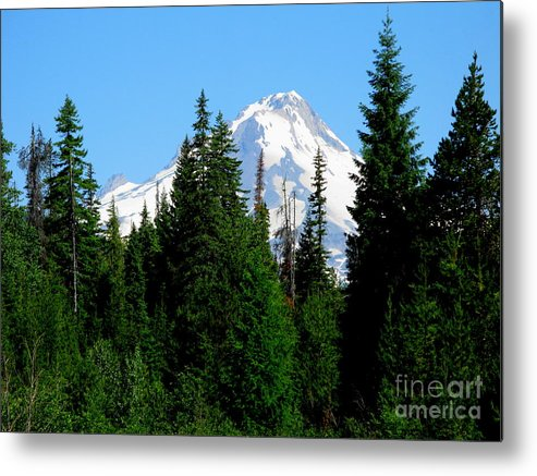 Mt. Hood Metal Print featuring the photograph Mount Hood Majestic by PJ Cloud