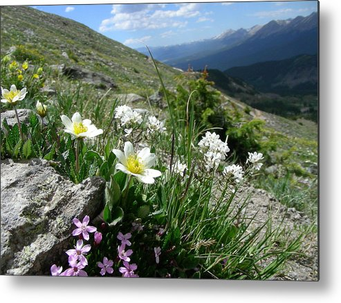 Nature Metal Print featuring the photograph Mountainside by Peter McIntosh