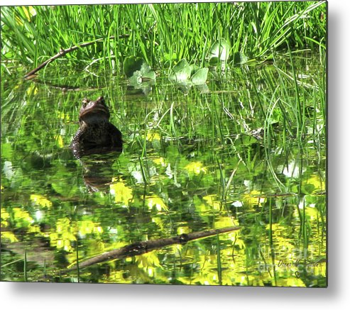 Toad Metal Print featuring the photograph Mr. Grompy by Donna Brown